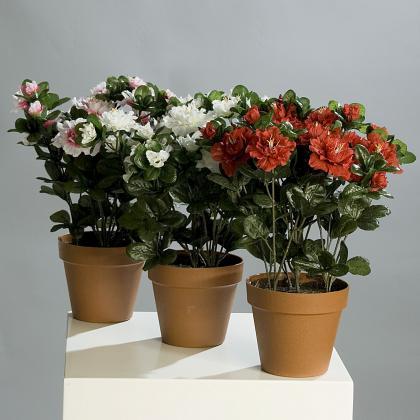 Azalka v květináči 33cm Barva: bílá