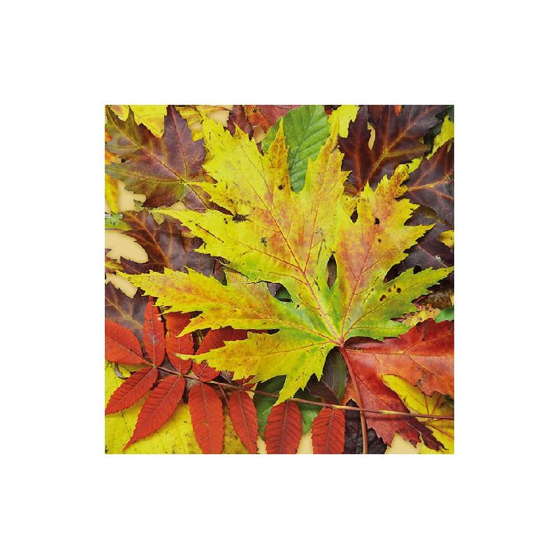 Ambiente Papírové ubrousky podzimní barevné listí balení 20ks