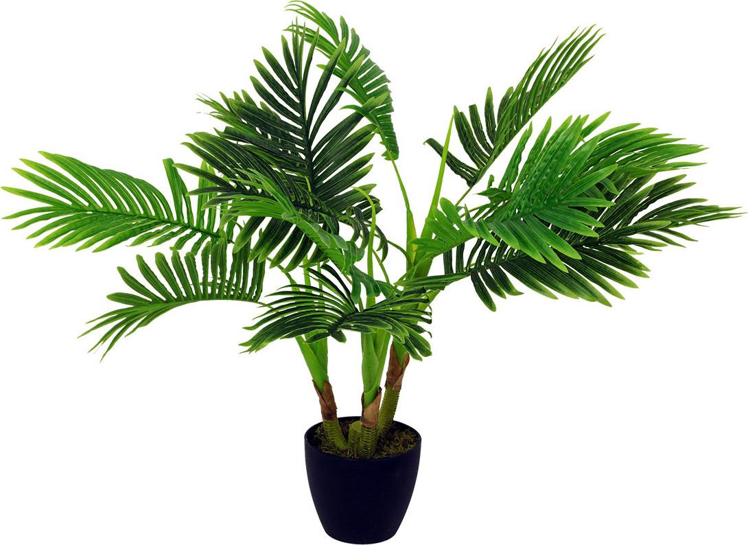 Palma v květináči 80cm