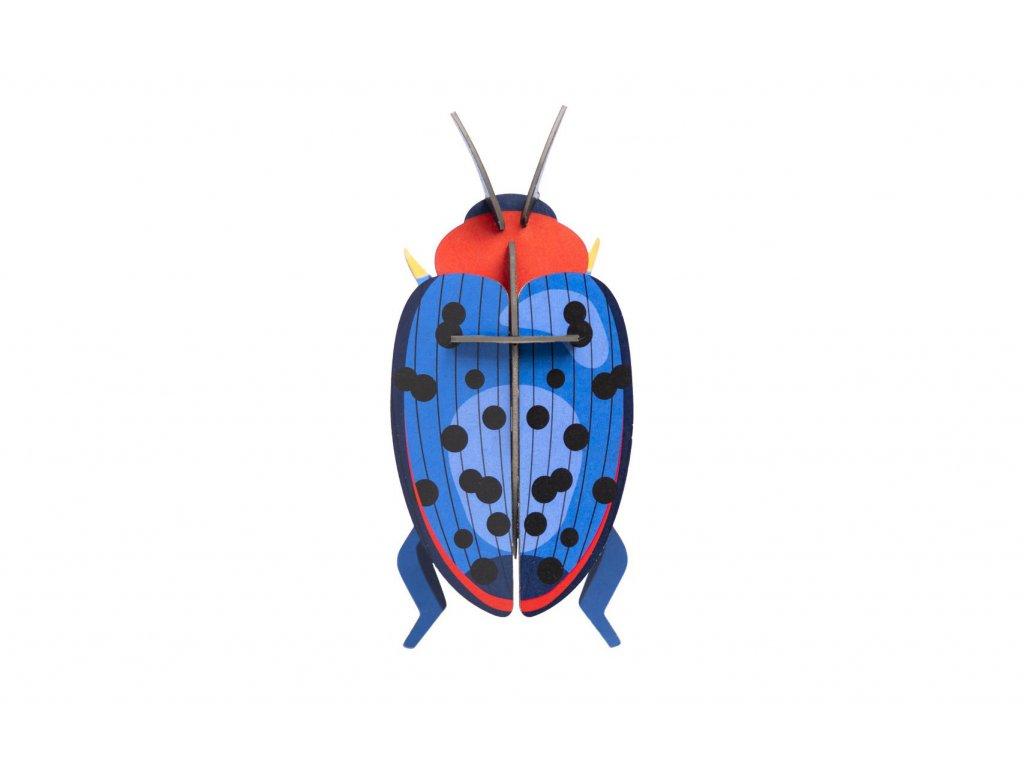 fungus beetle 5
