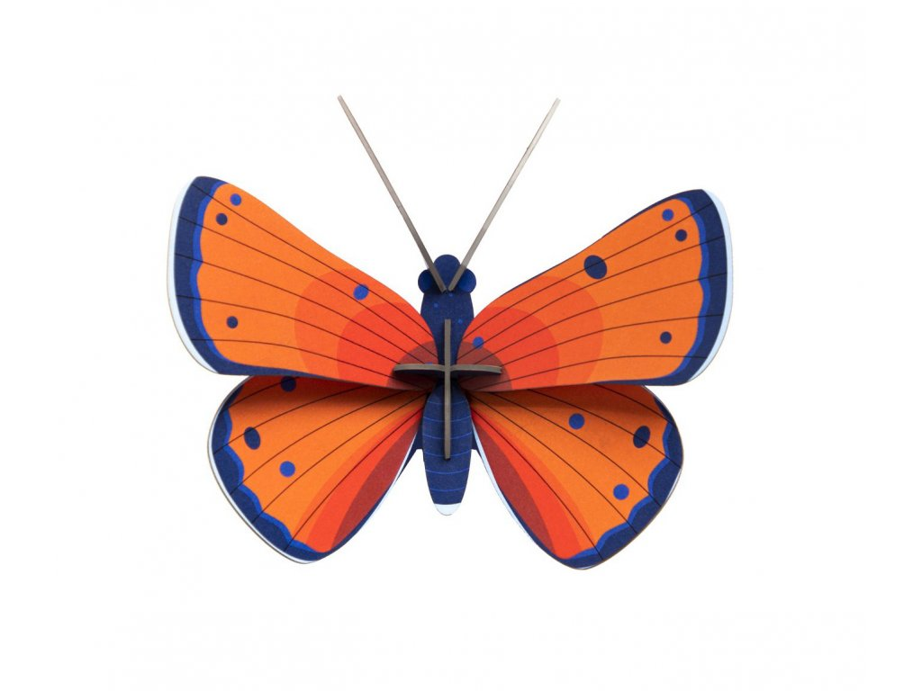 copper butterfly 6