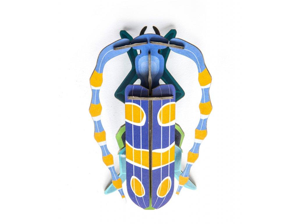 Rosalia Beetle 4