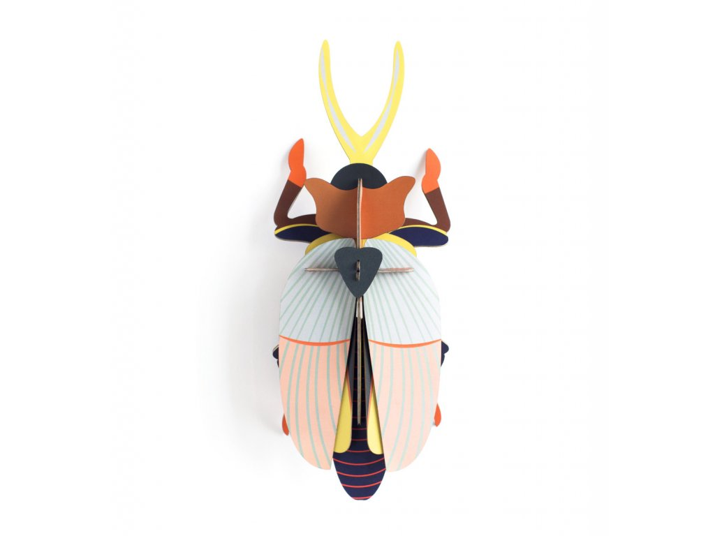 Rhinoceros Beetle 1