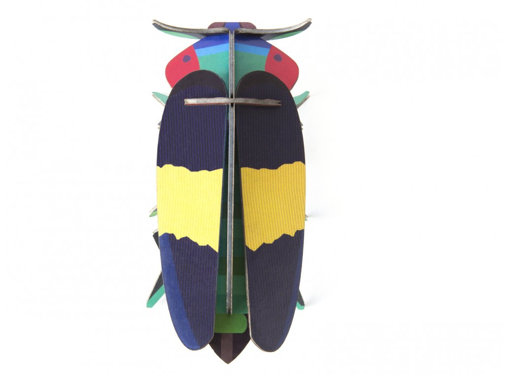 jewel beetle 1