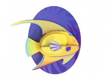 yellow angelfish 6