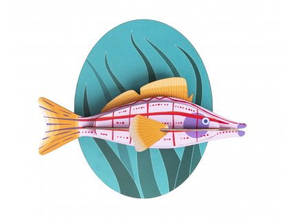 longnose hawkfish 2