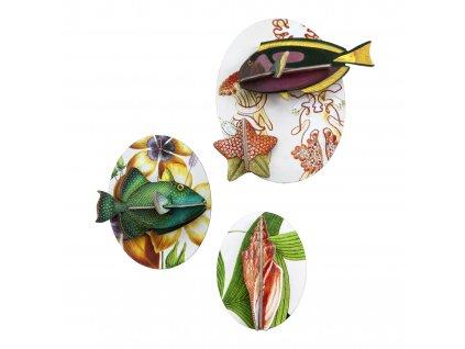 collectors box fishes 5