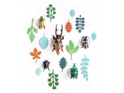 beetle antiquary nahled