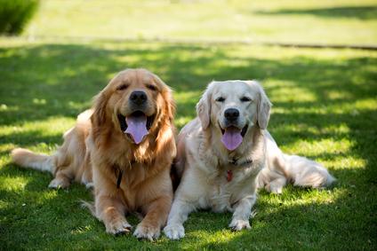 Ochrana psov pred hmyzom, roztočmi a kliešťami - časť 1.