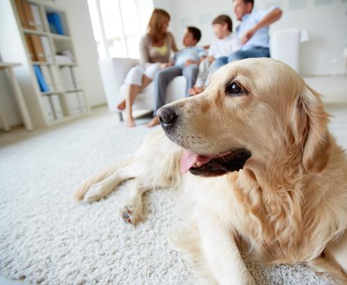 Ako pomôcť psovi, ktorý sa bojí samoty?