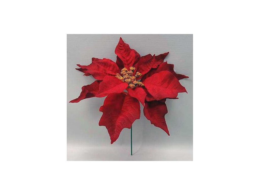 Kvet Poinsettia MP.red, červená, stonka, 23x20 cm, bal. 6 ks