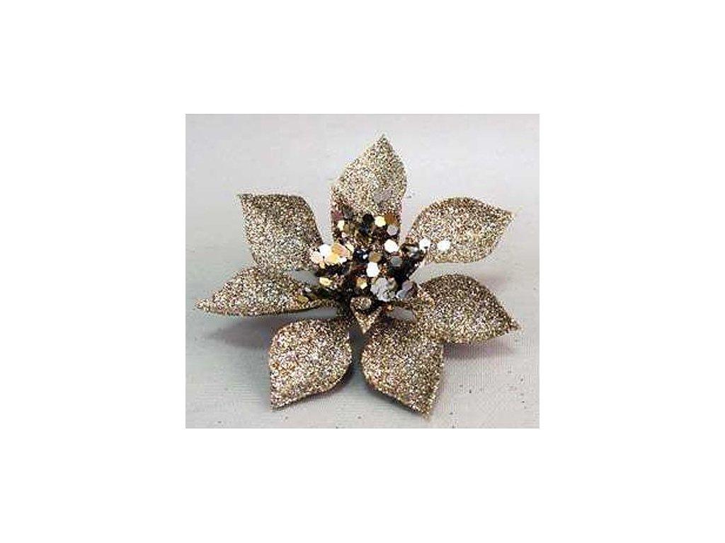 Kvet Poinsettia Gliterclip.Champ, šampaň, 10 cm