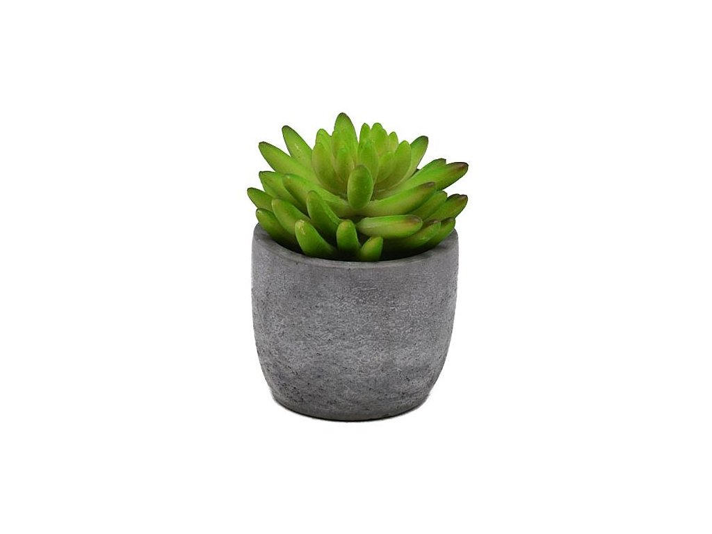 Sukulent MagicHome S33602, 11 cm, črepník- cement