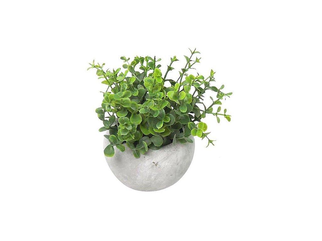 Oregano sukulent, MagicHome,, 15 cm, črepník- cement