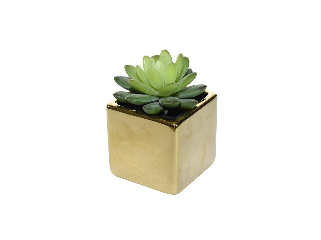 Sukulent MagicHome SA3905, 10 cm, črepník- keramika, zlatý