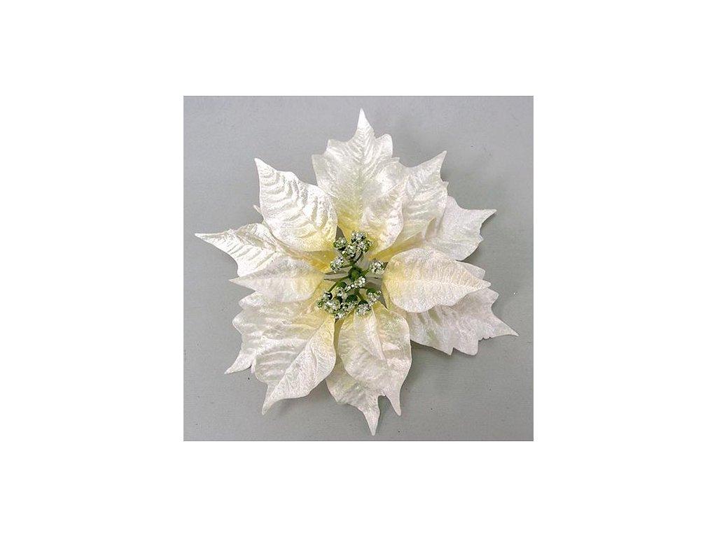 Kvet Poinsettia Clipon23, krémová, 23 cm, bal. 12 ks