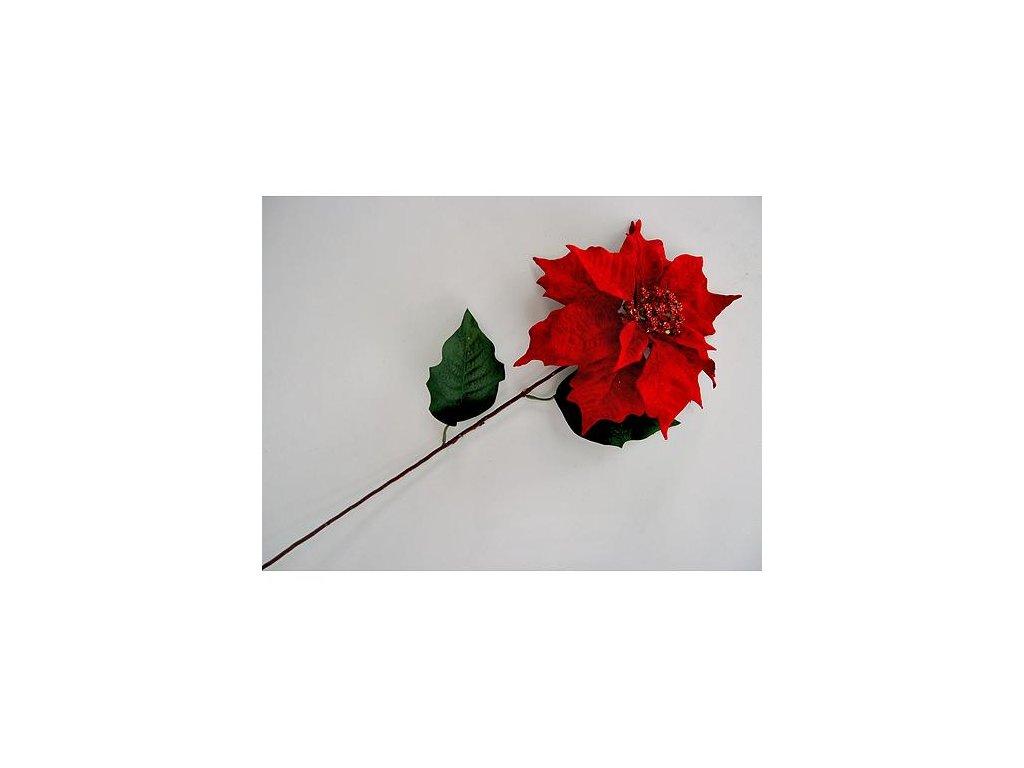 Kvet Poinsettia 75, červená, stonka, 23x75 cm, bal. 12 ks