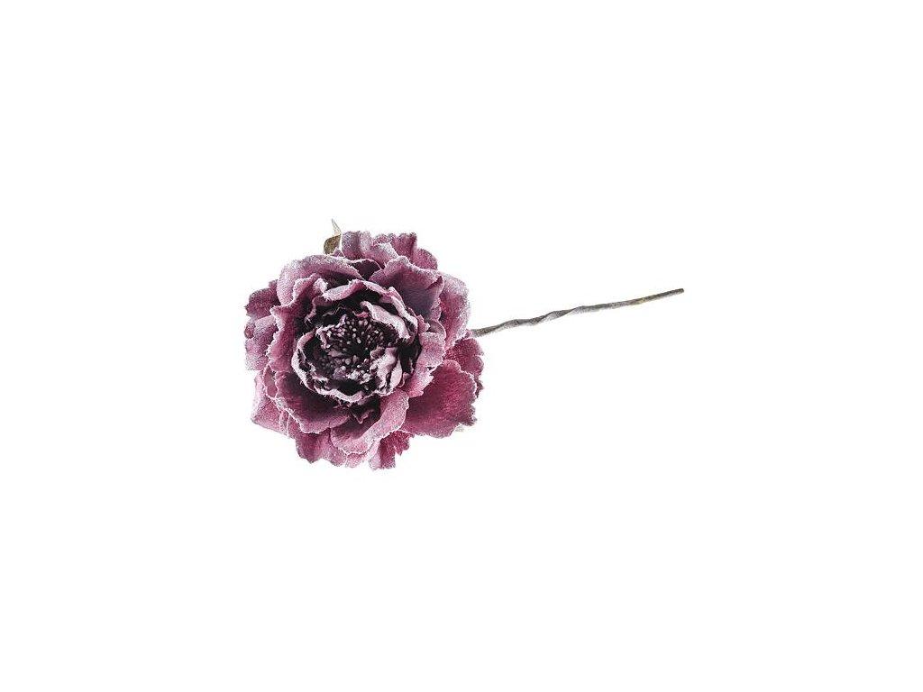 Kvet pivónia, tmavo ružová, stonka, bal. 6 ks