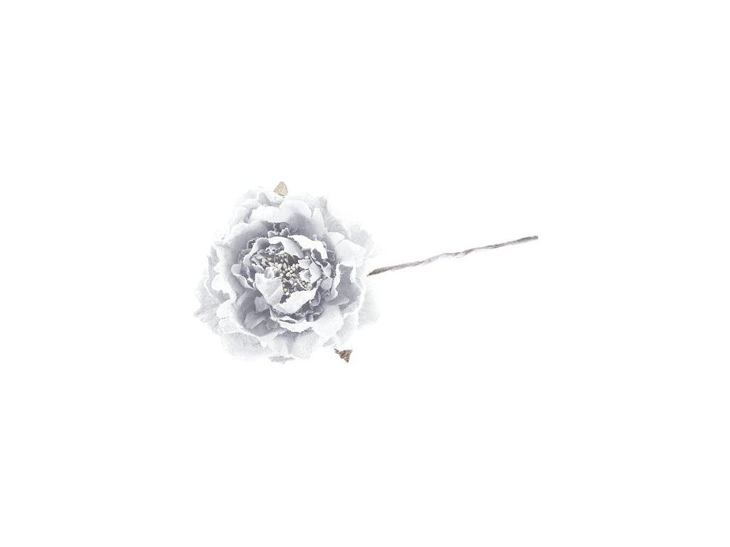 Kvet pivónia, biela, stonka, bal. 6 ks