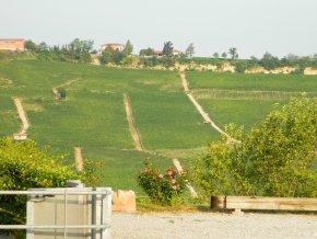 Barolo vinice9