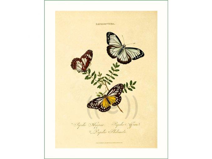 154 motýli (17)