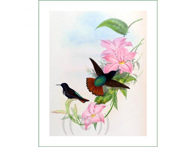 látkový panel ptáci obraz na látce na šití na patchwork kolibříci (1)