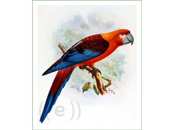 látkový panel ptáci ptáčci obraz na látce na šití na patchwork papoušek (11)