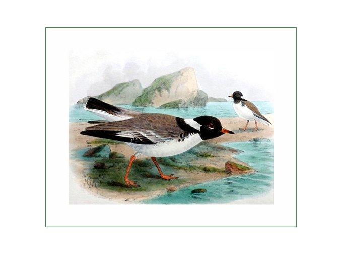 látkový panel ptáčci obraz na látce na šití na patchwork prodej látek VierMa ptáci (35)