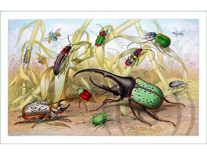 látkový panel digitálně tištěný na patchwork na šití hmyz (4)