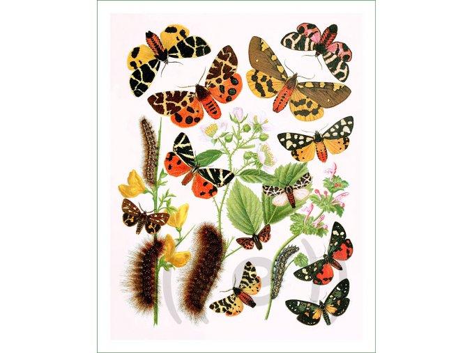 digitálně tištěný látkový panel na patchwork na šití motýli (38)