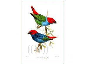712 ptáci (32)