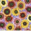 PWPJ111.BRIGHT látka vzor slunečnic amerivká designová metráž Philip Jacobs pro Kaffe Fassett Collective