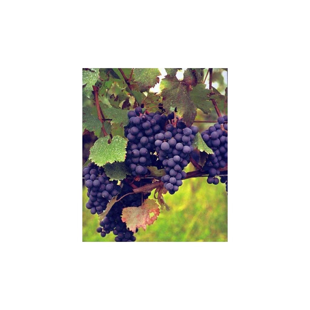 georgian grapes 9