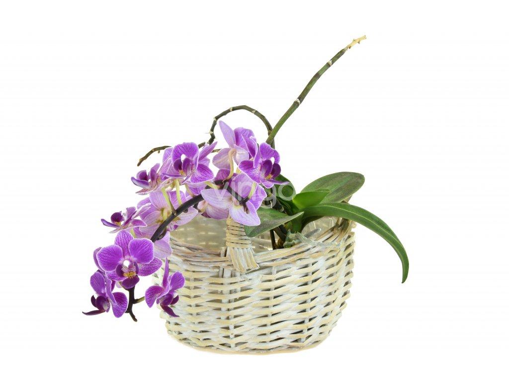 11384 2 kvetinac kosicek