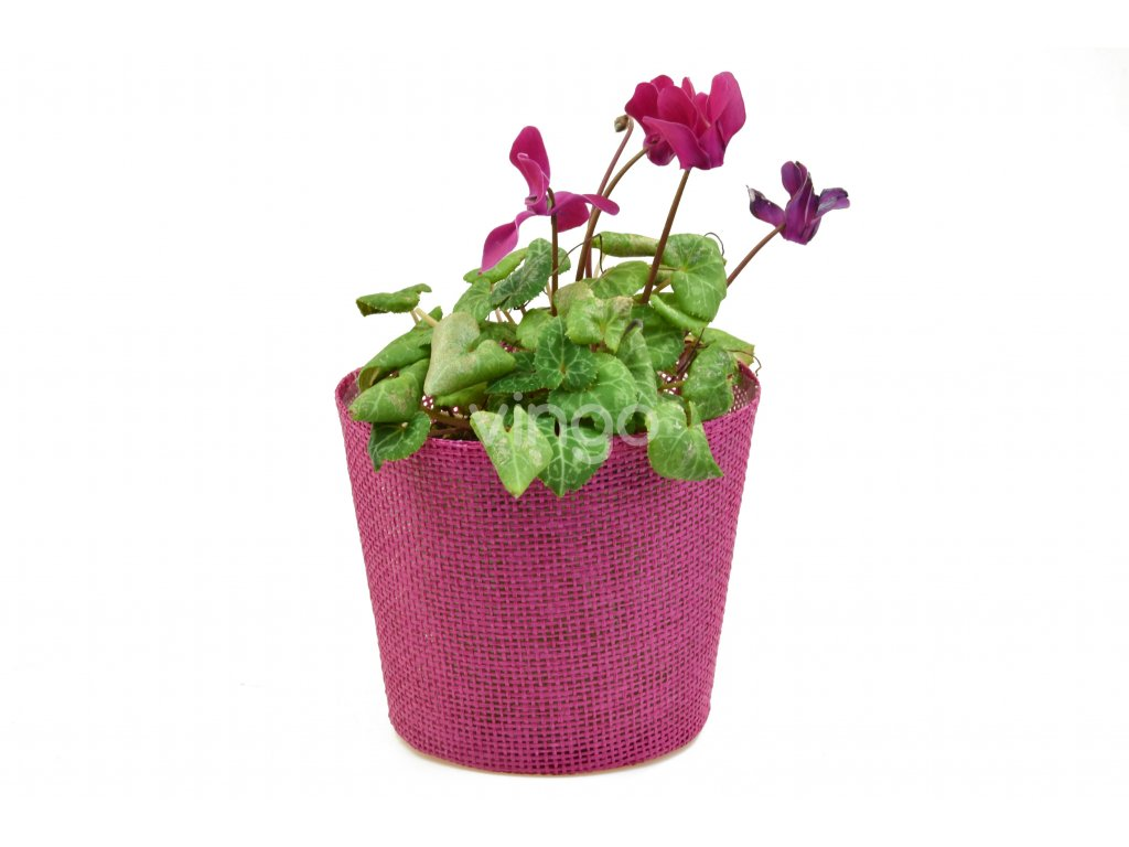 Květináč růžový