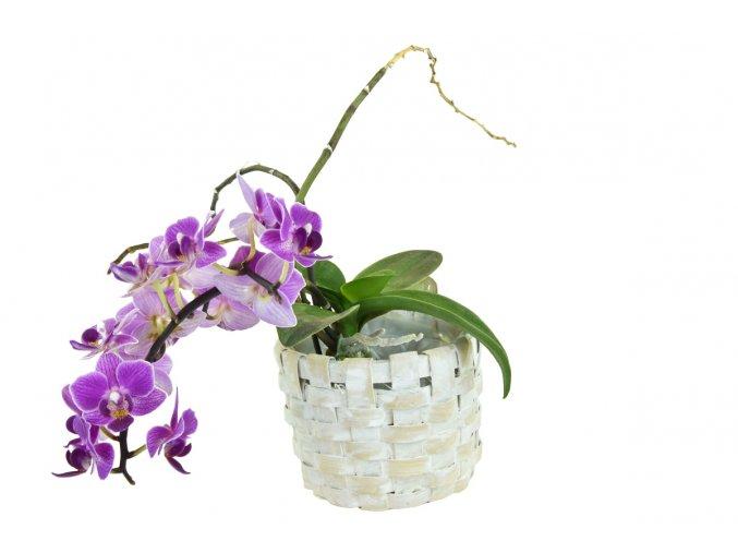Květníček bílý