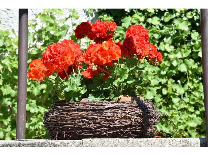 5489 kulaty kvetnik brezovy