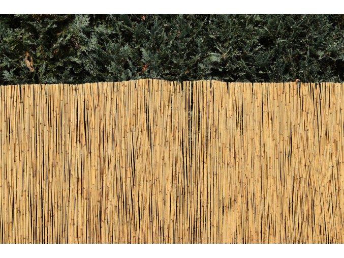 Rákosový plot (Rozměry 100x600)