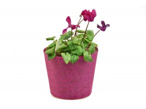 12676 kvetinac ruzovy