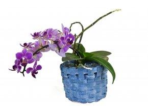 Květníček  modrý