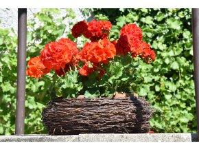 Kulatý květník březový