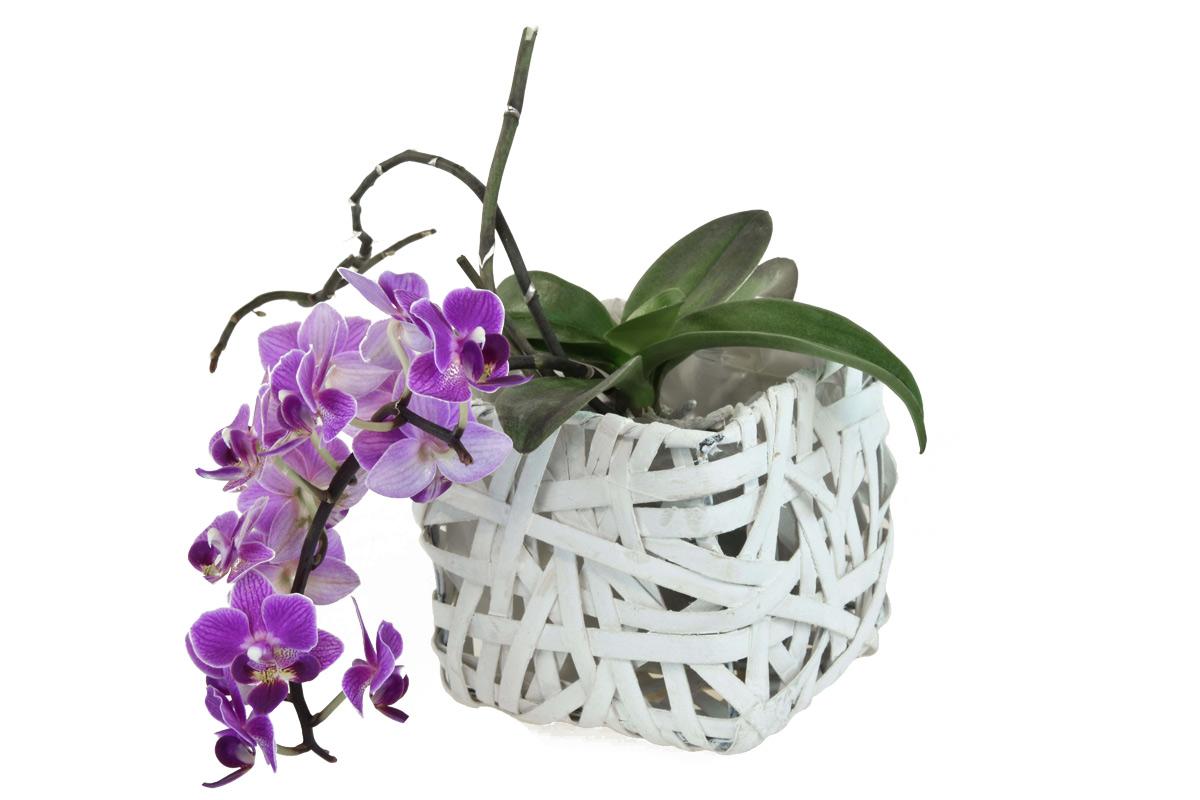 Bílý hranatý květináč z dýhy Rozměry (cm): Sada: 21x21x16|16x16x13|12x12x11