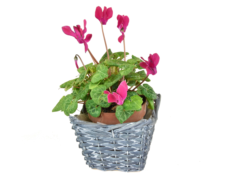 Sada 3 květináčů hranatých