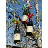 Langhe Chardonnay DOC, 0,75l, 13,5% alc., 2017