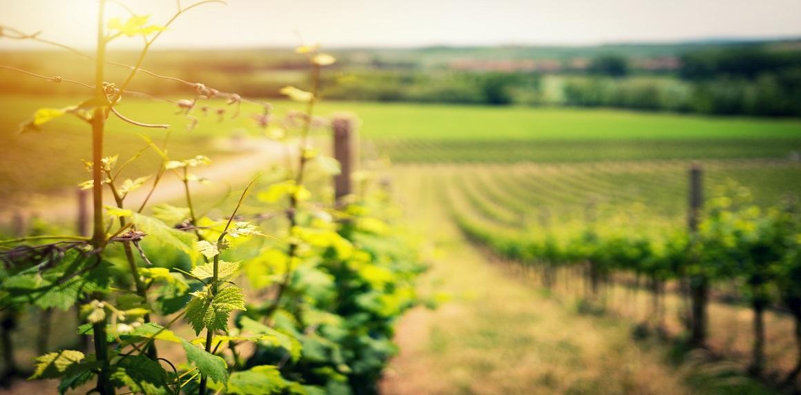Víno z Makedonie - makedonská vína skladem.