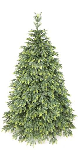 vianočné stromčeky jedle