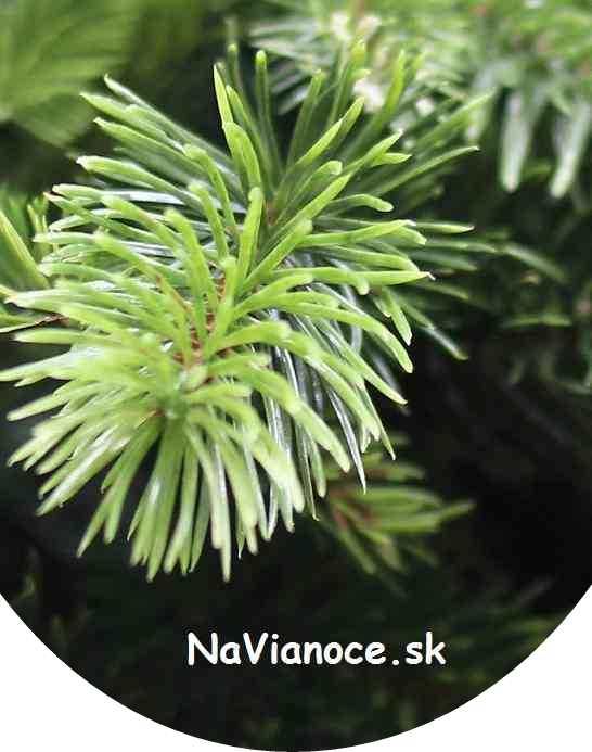 široké vianočné stromčeky moderné 3d ihličie