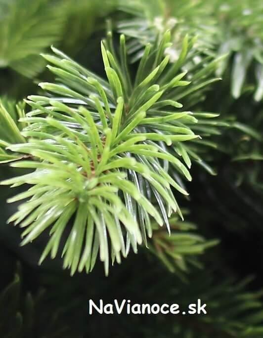 trendy vianočné stromčeky umelé 3d