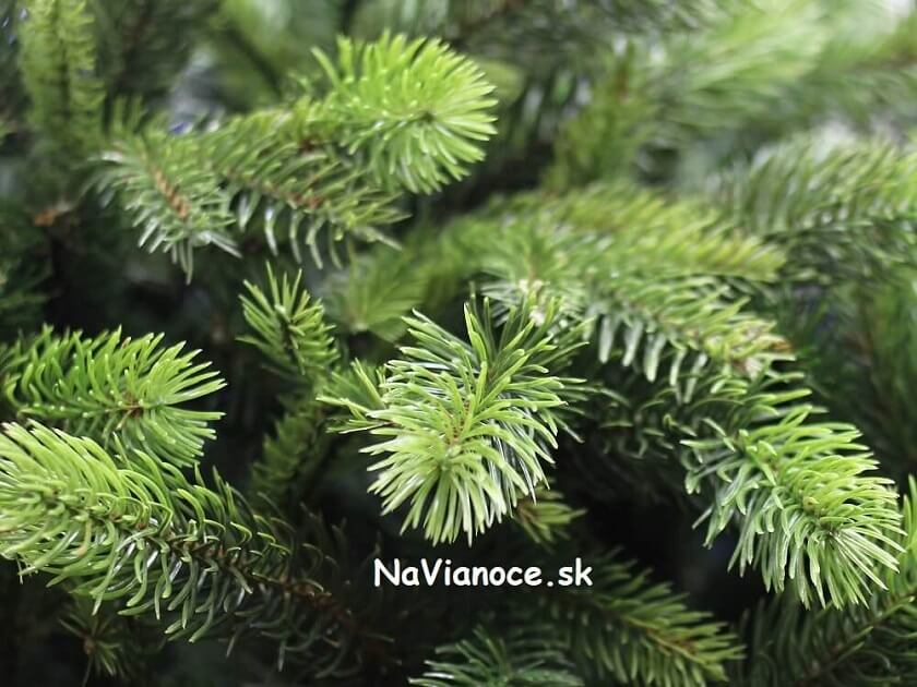 vianočný stromček smrek