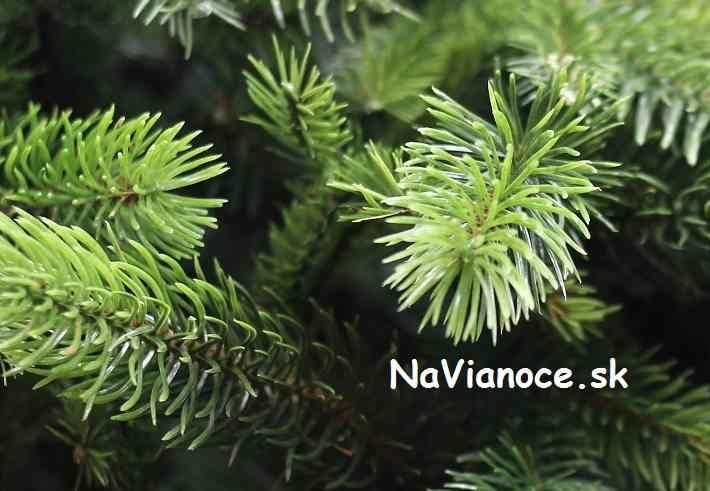 vysoké vianočné stromčeky 3d trojrozmerné ihličie
